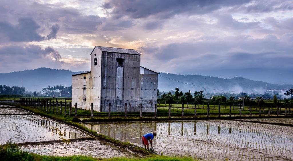 Petani dan Rumah Walet