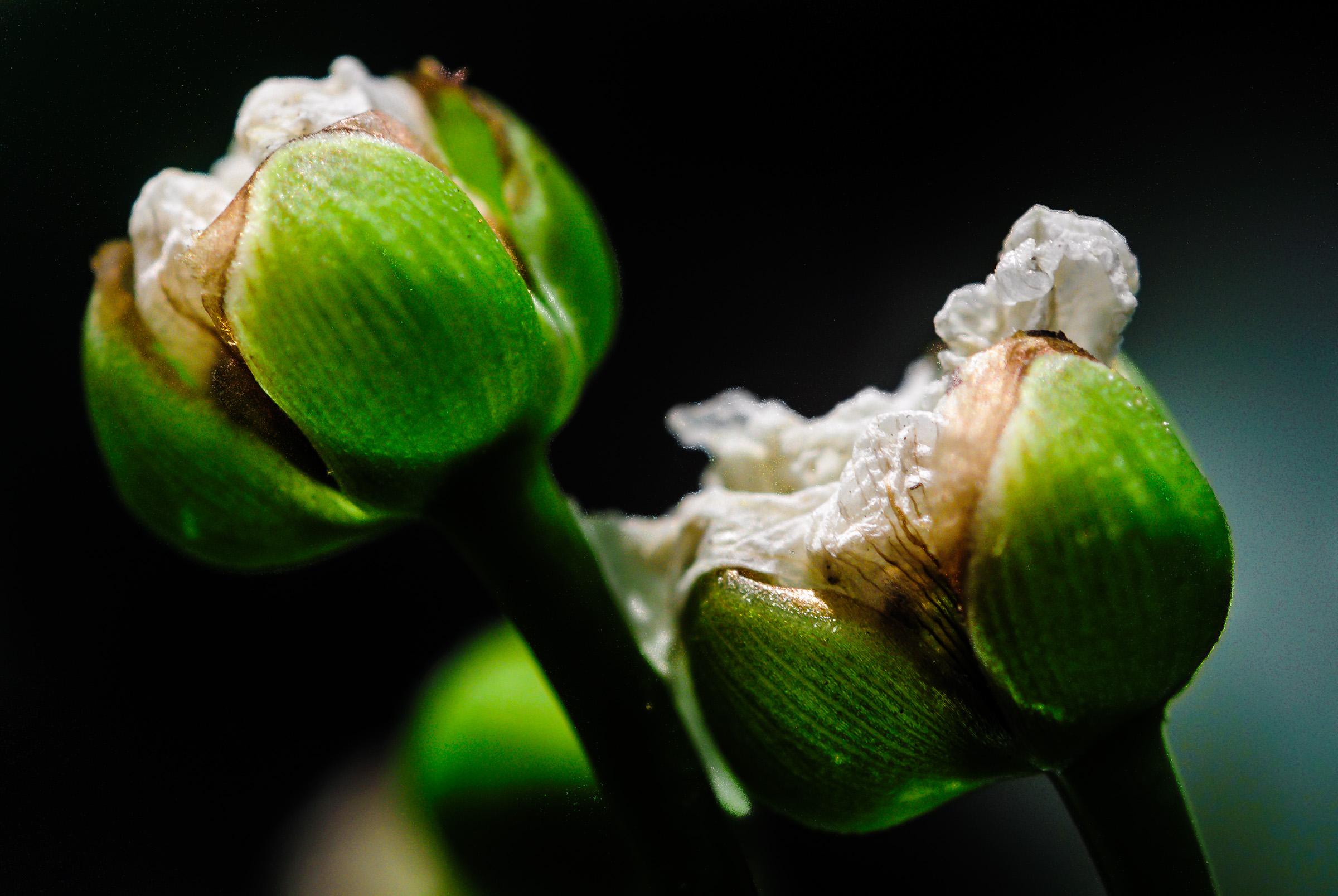 Bunga Rumah