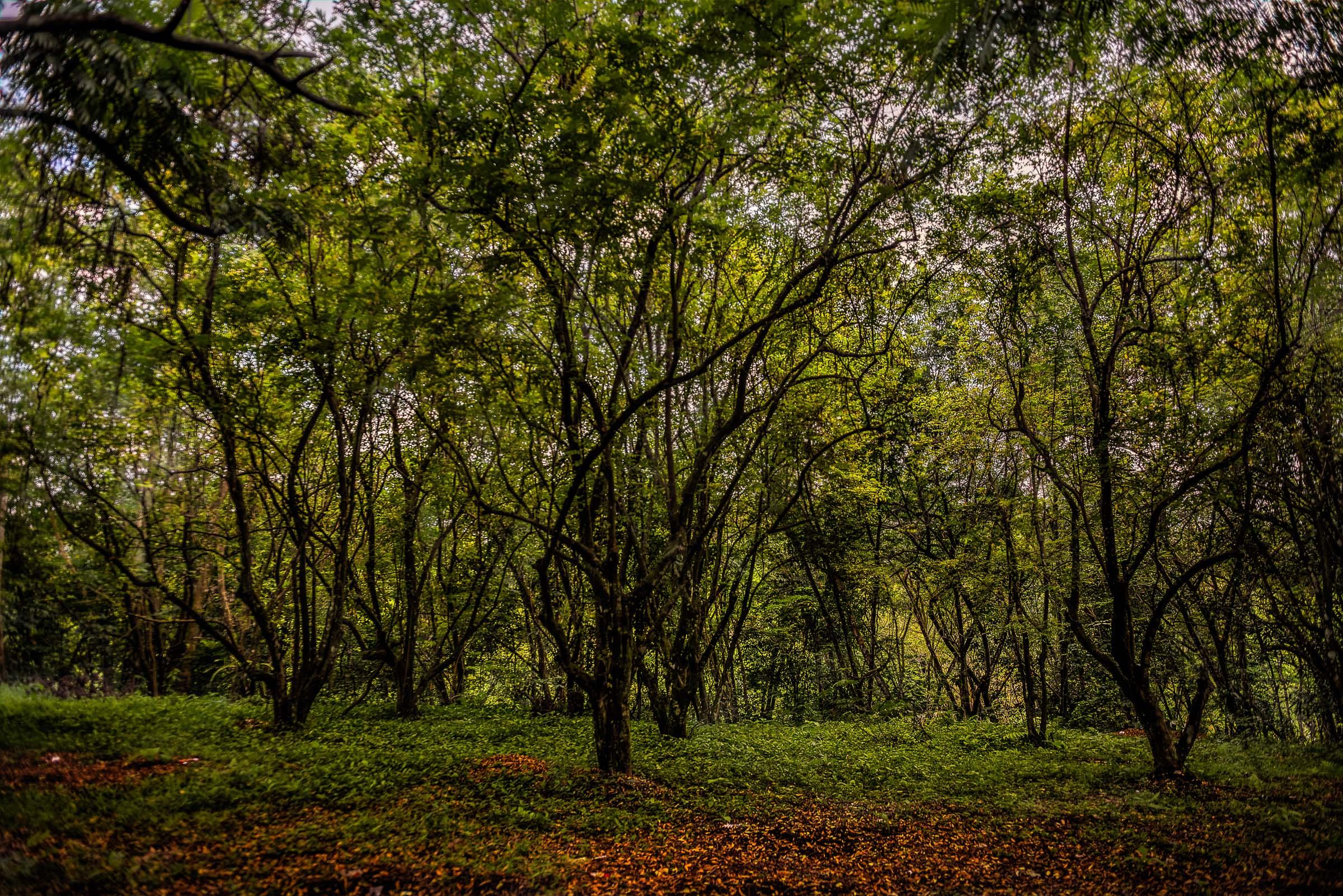 Trees HDR - Iksa Menajang