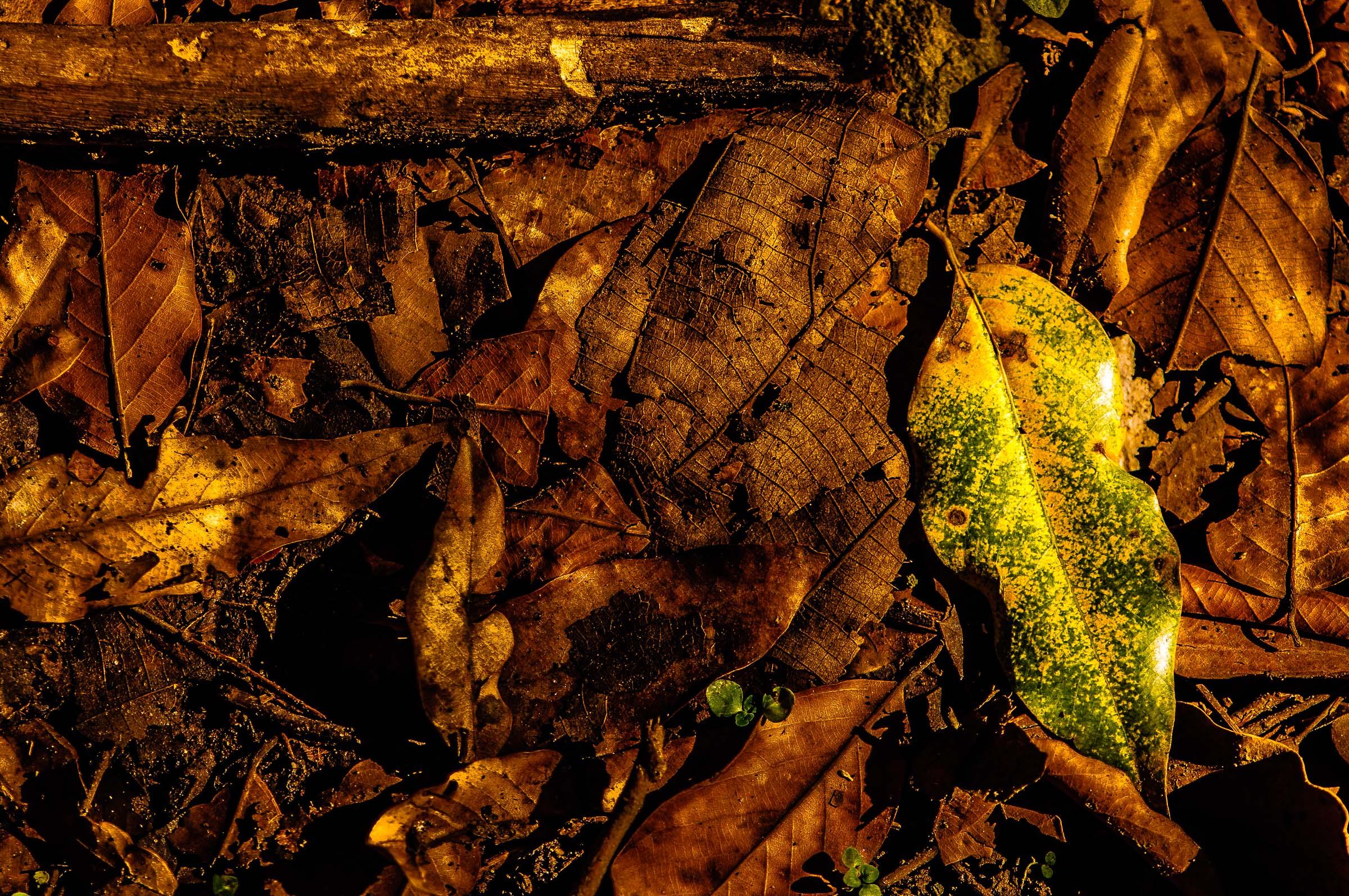 Leaf Seed - Iksa Menajang