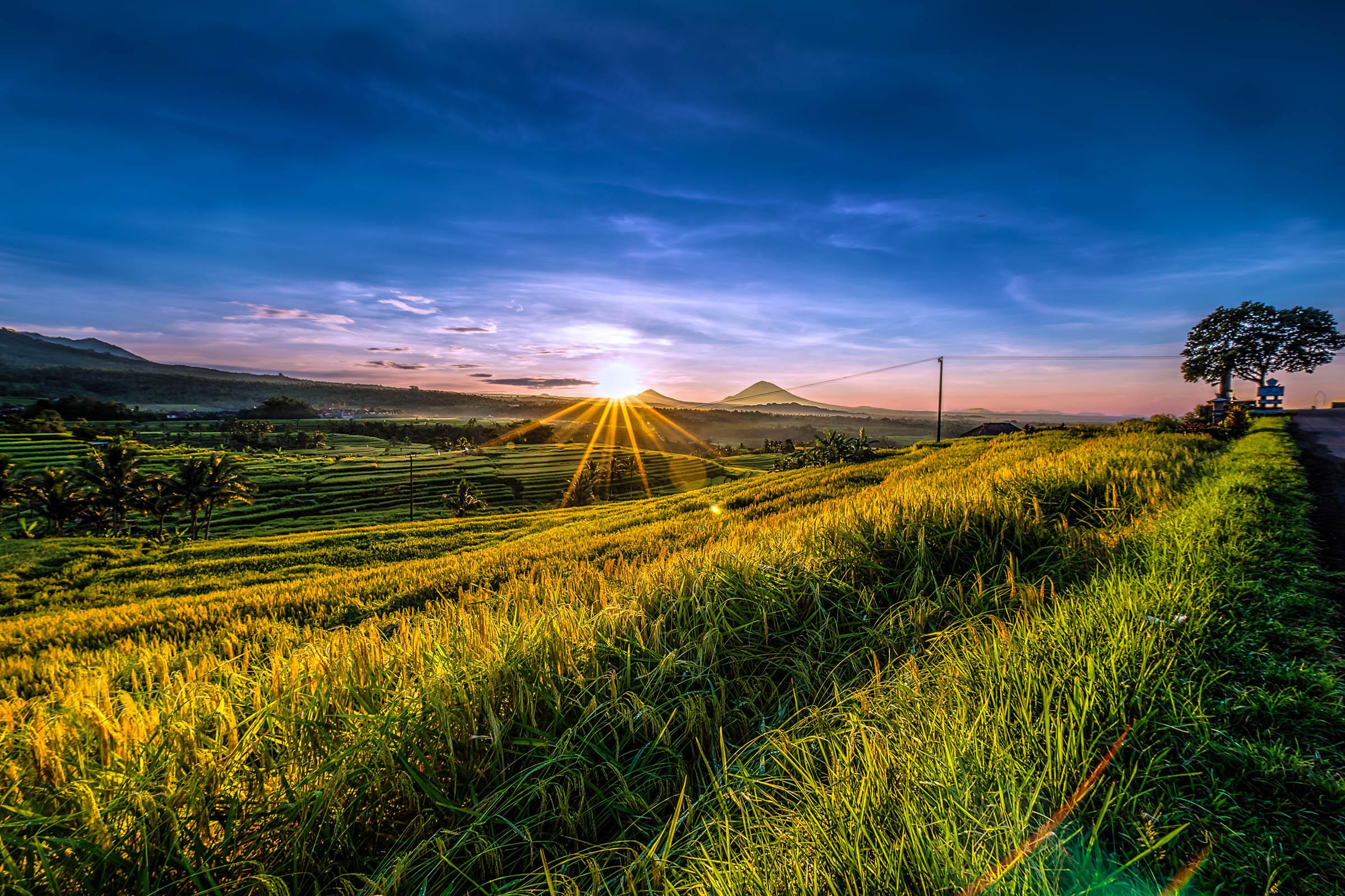 Jatiluwih Sunrise - Iksa Menajang