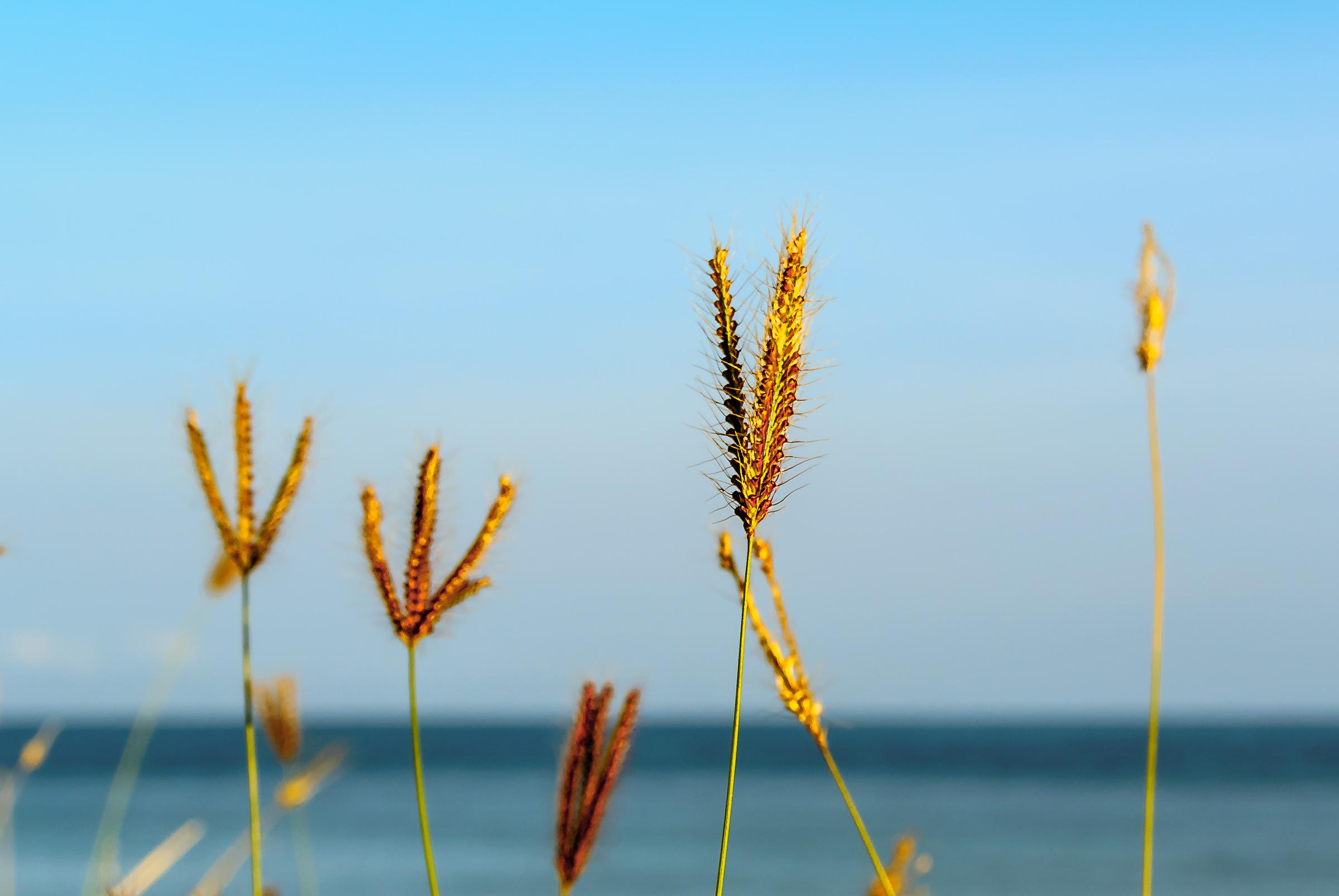 Weed Flower - Iksa Menajang