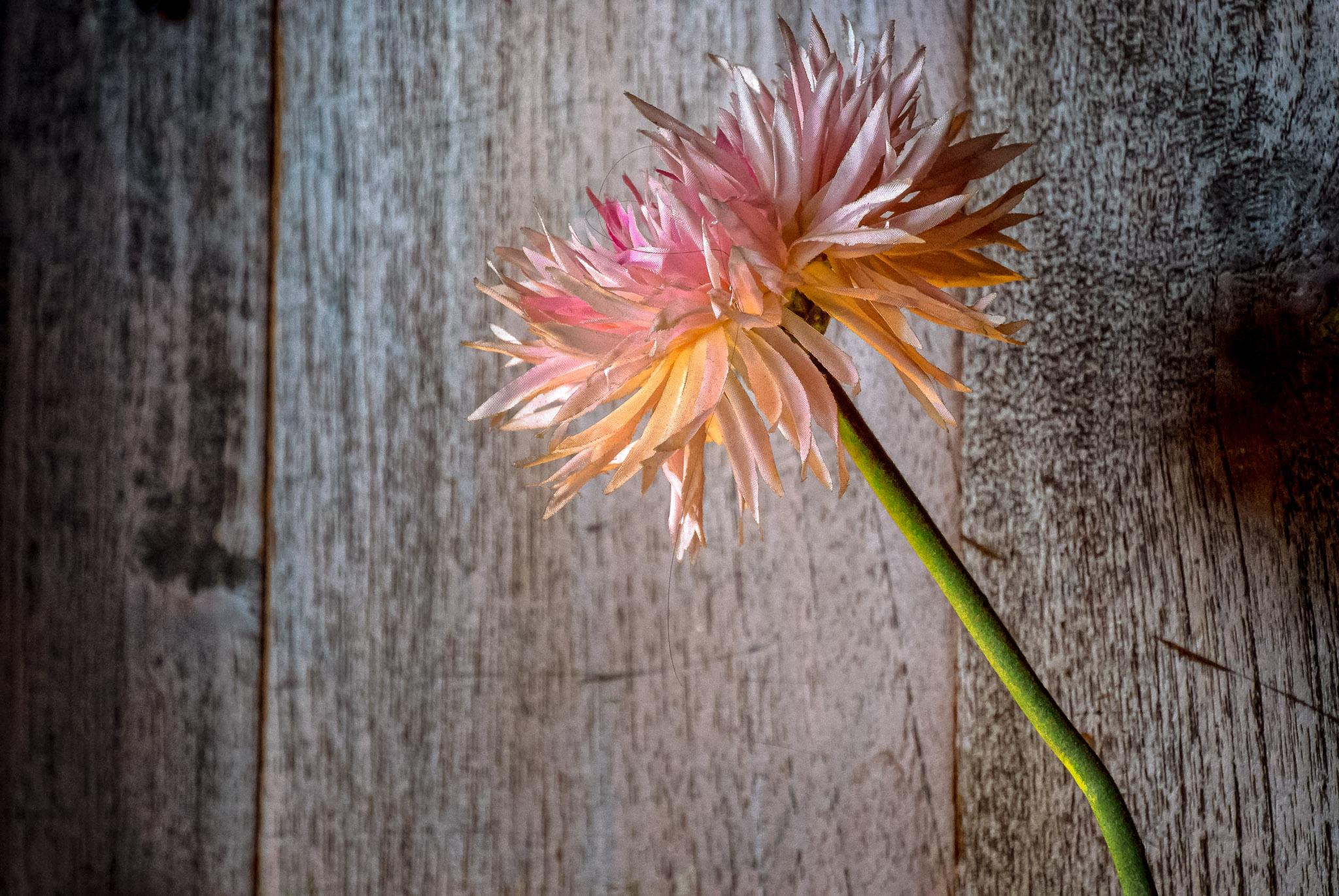 Flower - Iksa Menajang