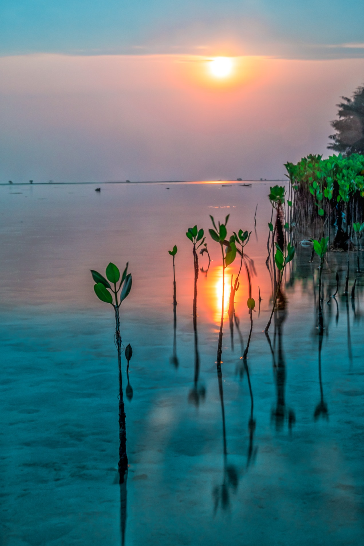 Tidung Mangroves Sunrise