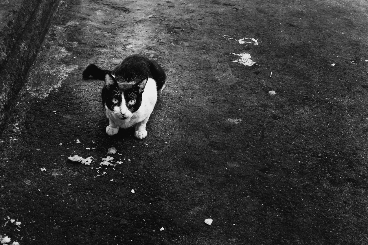 Black & White Cat