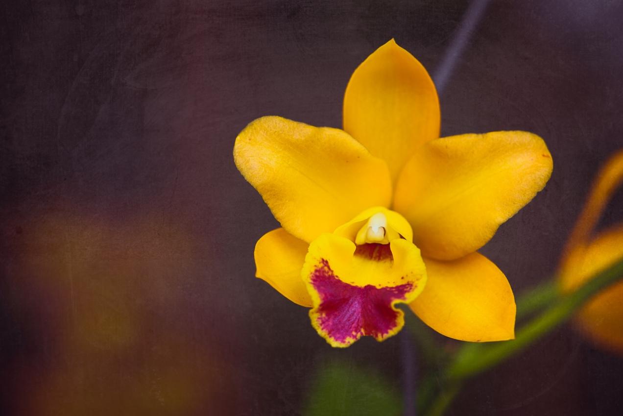 Orchid Nikon 105