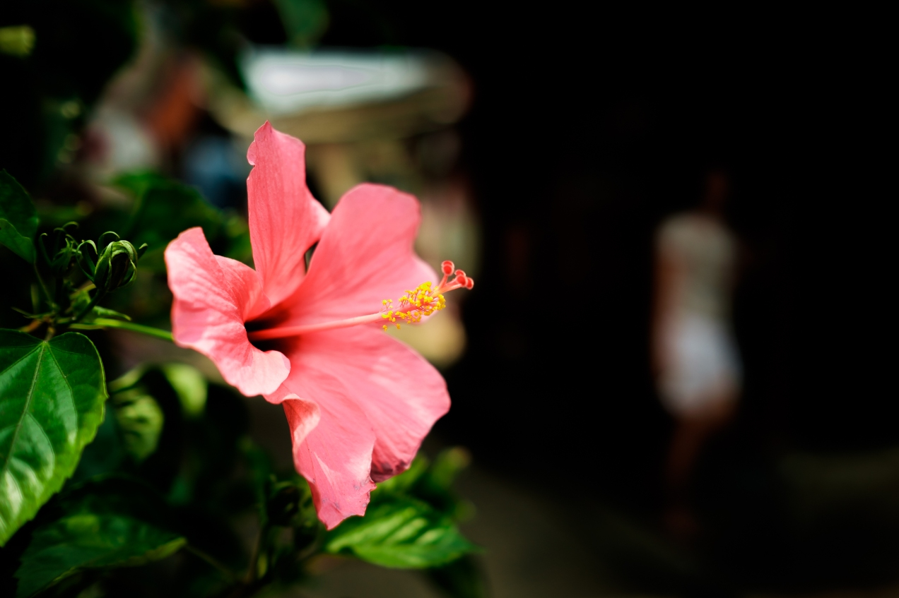 Hibiscus by Iksa XT1